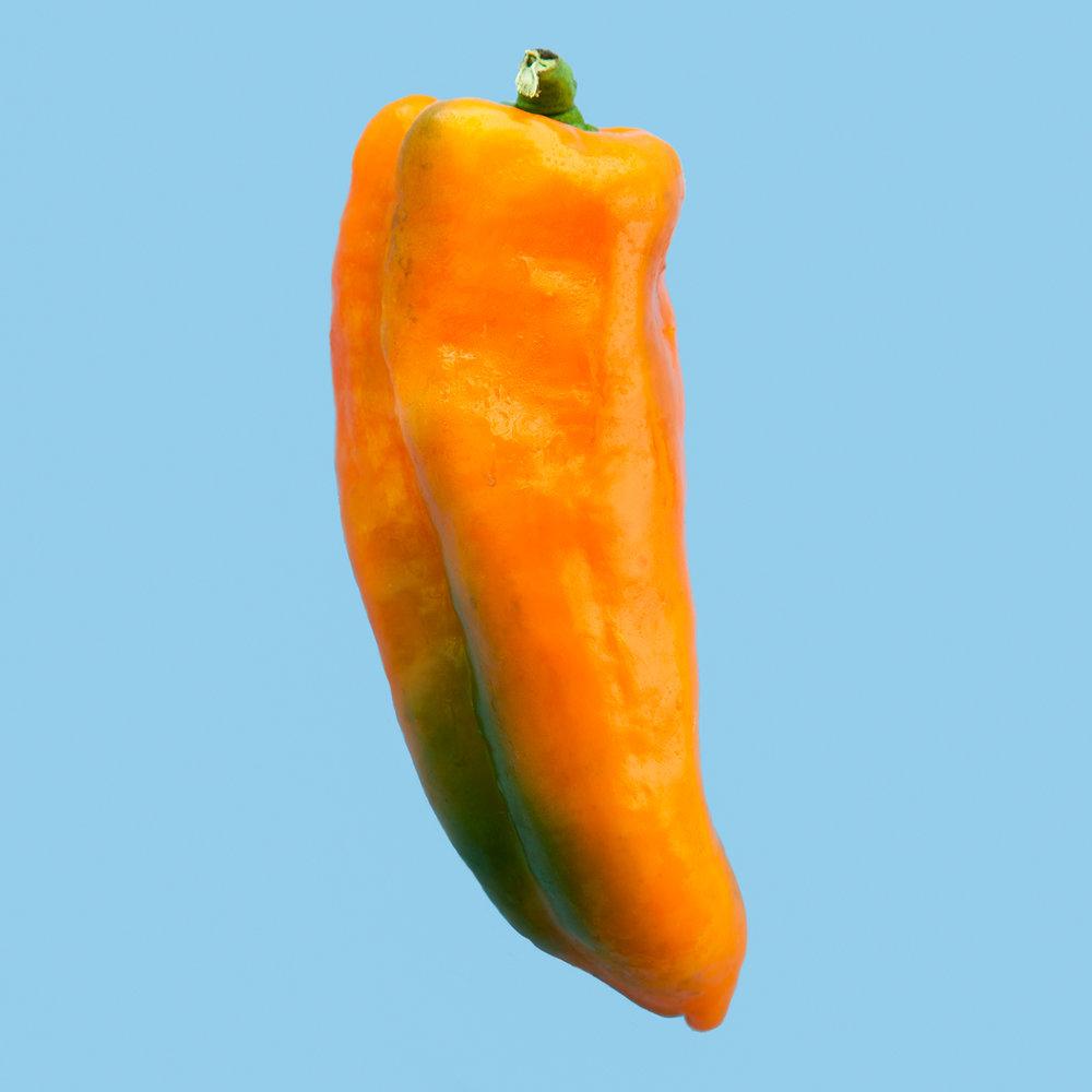 PEPPER--GATHERERS-GOLD-ORGANIC-VEGETABLE-FOOD-ORANGE_HICKORIES-FARM-©-JONATHAN-R.-BECKERMAN-PHOTOGRAPHY-083016_COLOR.jpg
