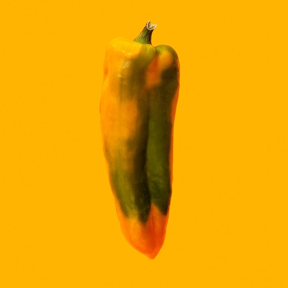 PEPPER-GOLDEN-HORN-ORGANIC-HICKORIES-FARM--©-JONATHAN-R.-BECKERMAN-PHOTOGRAPHY-083016-COLOR.jpg