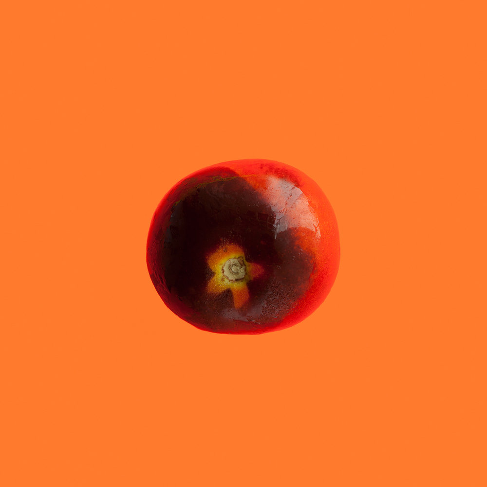 PLUM-ORGANIC-FRUIT-FOOD-HICKORIES-FARM-CT-©-JONATHAN-R.-BECKERMAN-PHOTOGRAPHY-083016_COLOR.jpg