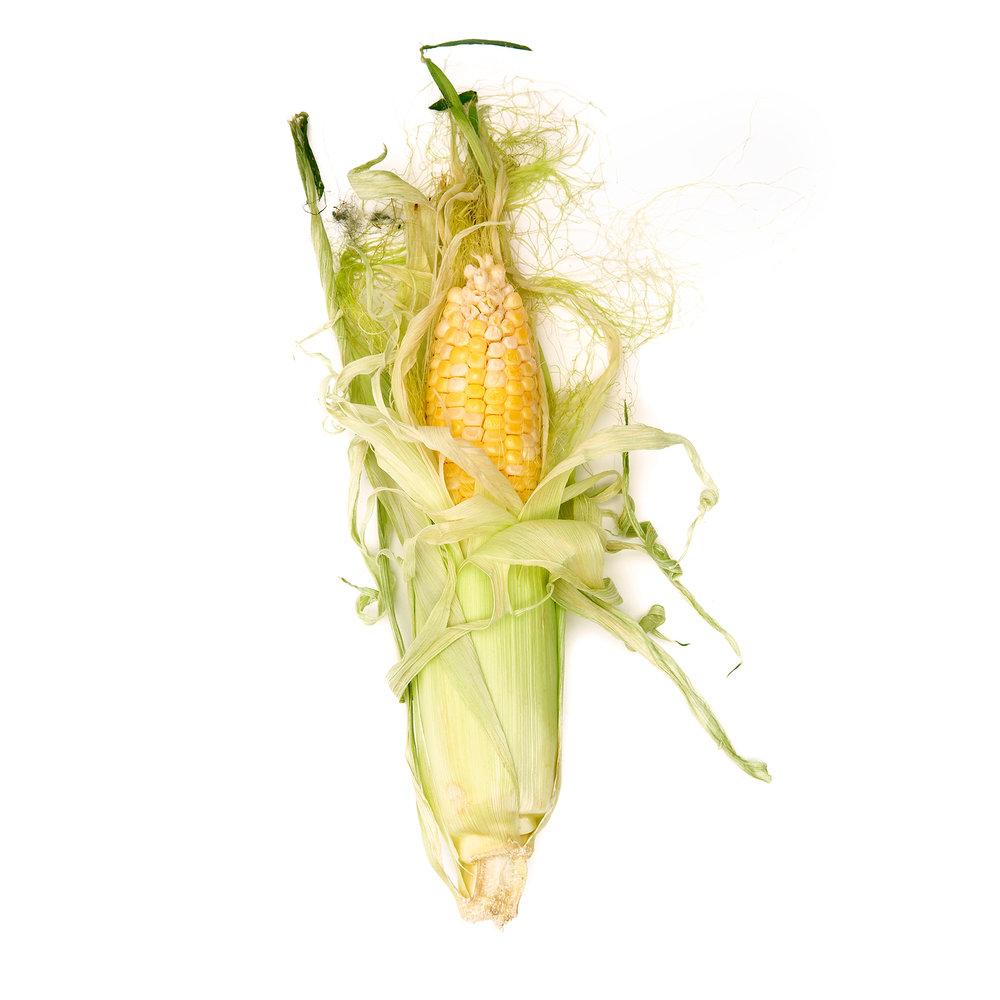 CORN-SWEET-CORN-03-ORGANIC-FORT-HILL-FARM-ON-WHITE-©-JONATHAN-R.-BECKERMAN-PHOTOGRAPHY.jpg