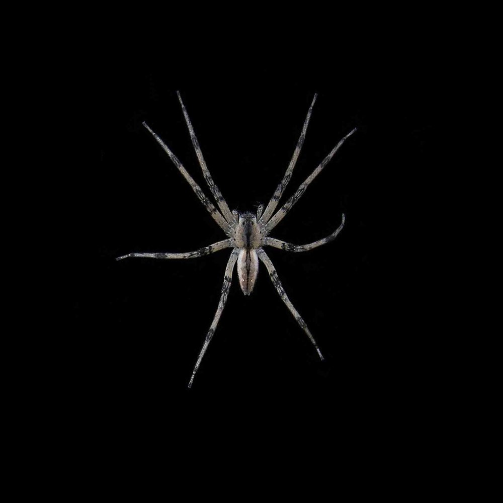 SPIDER-WOOD-SPIDER-01-CONNECTICUT-©-JONATHAN-R.-BECKERMAN-PHOTGRAPHY-020614.jpg