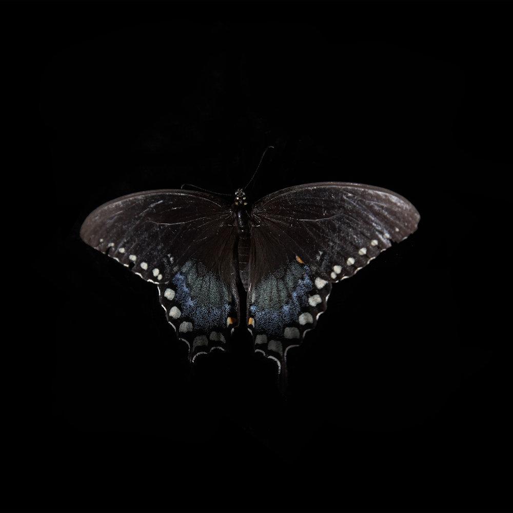 BUTTERFLY-BLACK--©-JONATHAN-R.-BECKERMAN-PHOTOGRAPHY-020614.jpg