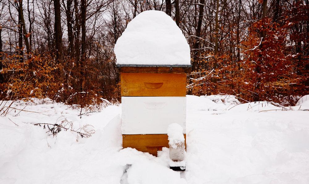 BEE-HIVE-IN-SNOW-WILTSHIRE-FARM-©-JONATHAN-R.-BECKERMAN-PHOTOGRAPHY.jpg
