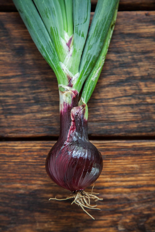 Southport Globe Onion 01 Sefra-Alexandra-Edible-Nutmeg-The-Seed-Huntress-Editorial-Photogray-By-Jonathan-R.-Beckerman-Photography_-447.jpg