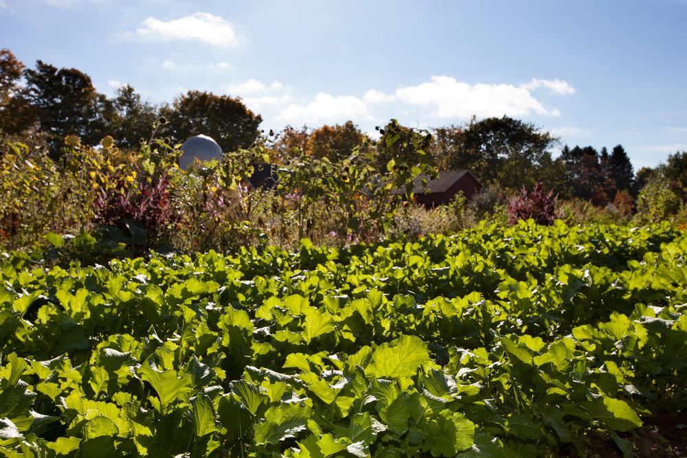 WINVIAN-FARM-CT-GARDEN-LANDSCAPE-©-JONATHAN-R.-BECKERMAN-PHOTOGRAPHY-100715_-33.jpg