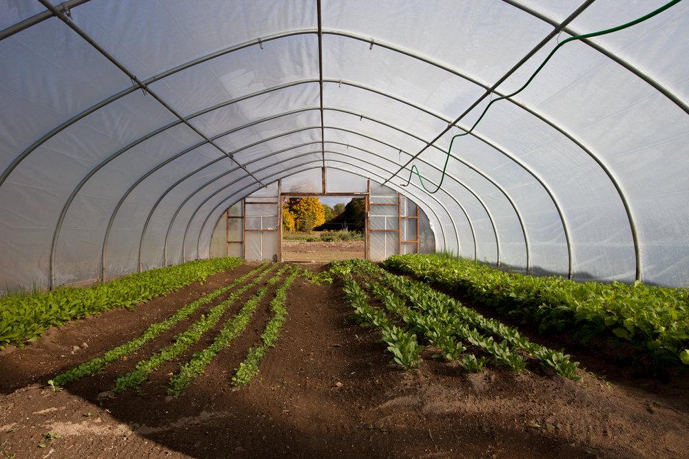 WINVIAN-FARM-CT-GARDEN-LANDSCAPE-©-JONATHAN-R.-BECKERMAN-PHOTOGRAPHY-100715_-37.jpg