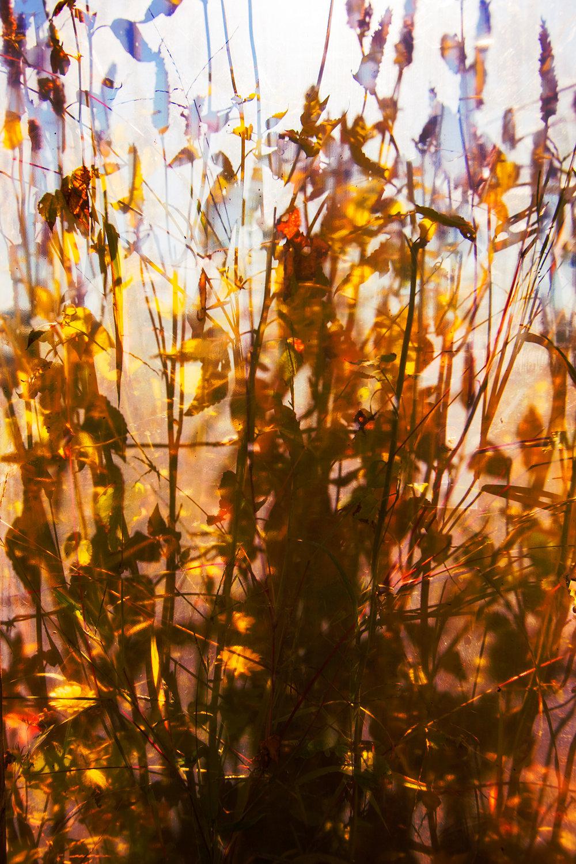 WINVIAN-FARM-CT-GARDEN-LANDSCAPE-©-JONATHAN-R.-BECKERMAN-PHOTOGRAPHY-100715_-536.jpg