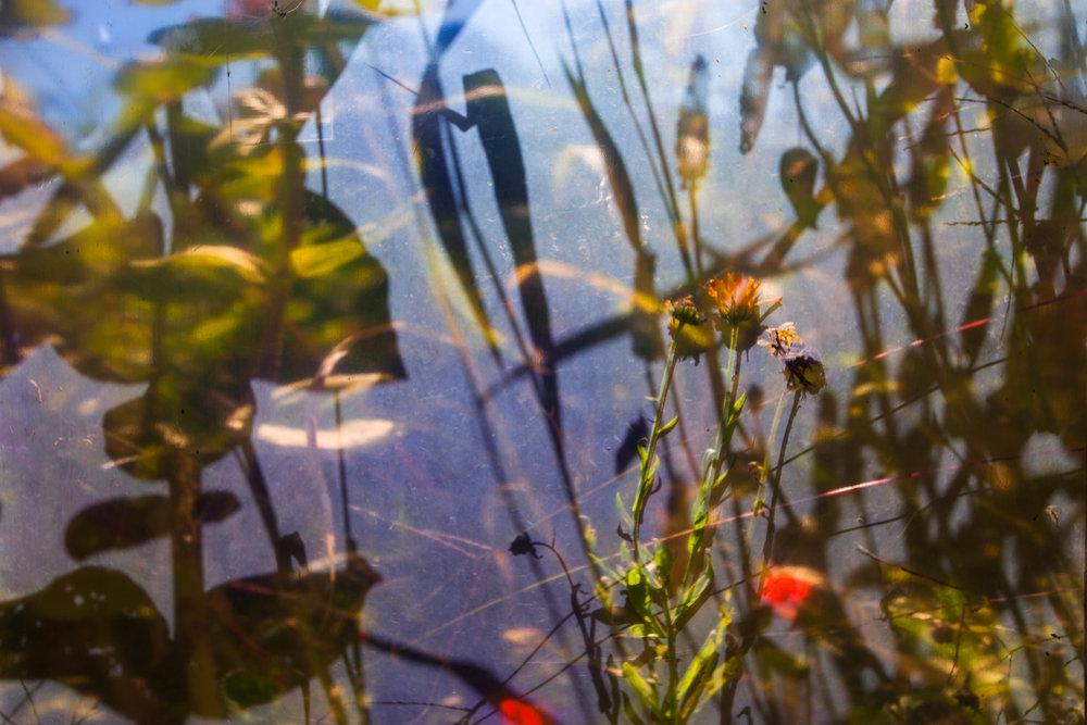 WINVIAN-FARM-CT-GARDEN-LANDSCAPE-©-JONATHAN-R.-BECKERMAN-PHOTOGRAPHY-100715_-534.jpg