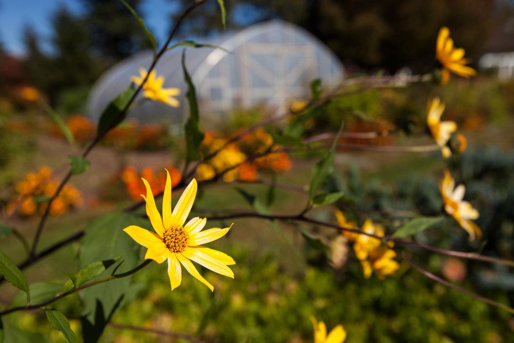 WINVIAN-FARM-CT-YELLOW-FLOWERS-GARDEN-LANDSCAPE-©-JONATHAN-R.-BECKERMAN-PHOTOGRAPHY-100715_-501.jpg
