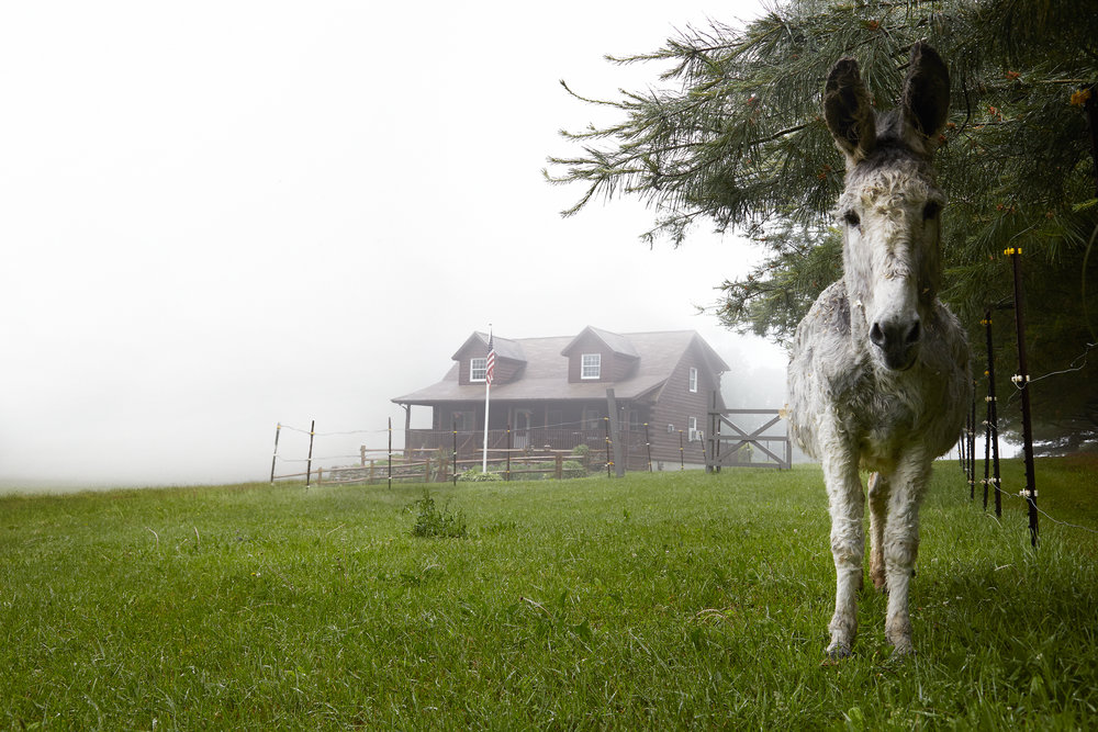 WHITE-DONKEY-ON-CONNECTICUT-FARM-LANDSCAPE-©-JONATHAN-R.-BECKERMAN-PHOTOGRAPHY-060516_29.jpg