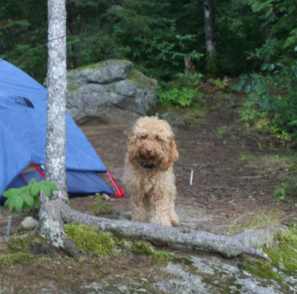 Camping with my furry baby, Noodle, in Minnesota.