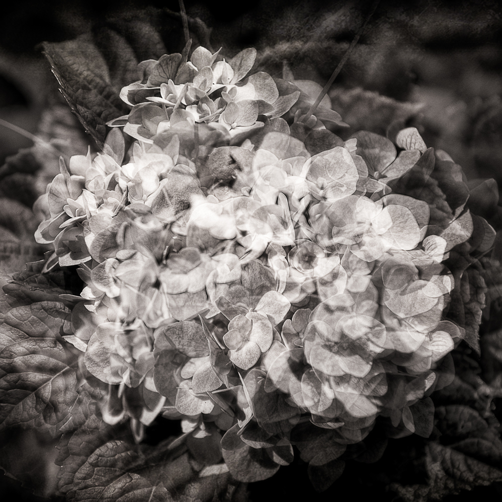 Flowers-_LGF8402-Edit-Edit.jpg
