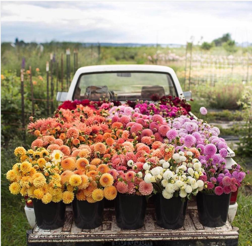 flower bed truck