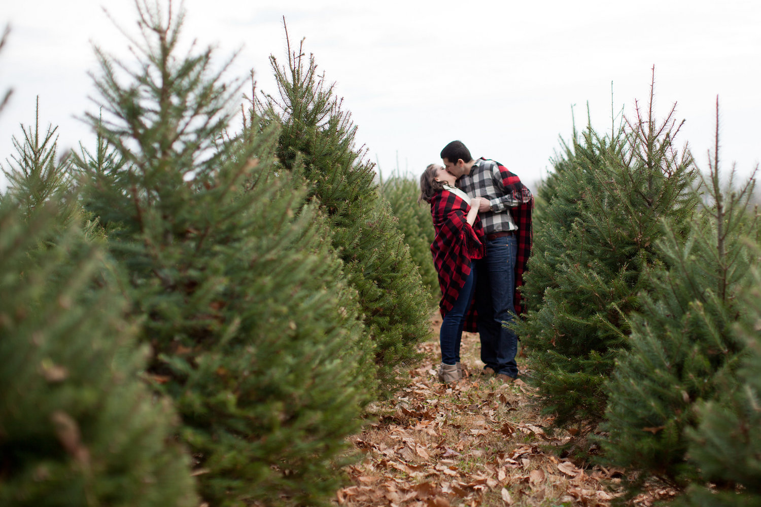 Christmas Tree Farm Photography.Amanda And Brian S Christmas Tree Farm Engagement
