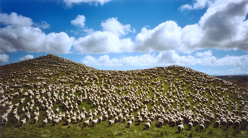 I seriously wasn't kidding about the sheep.