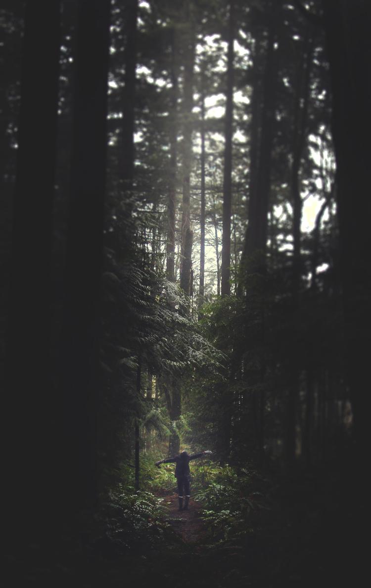 liz_forest_2.jpg