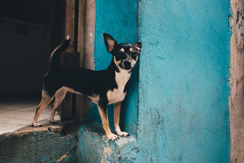 2016_Cuba-20.jpg