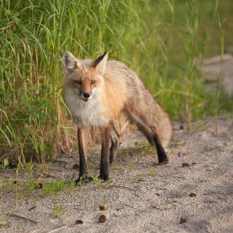 Landon's Legacy Retreat_fox.jpg