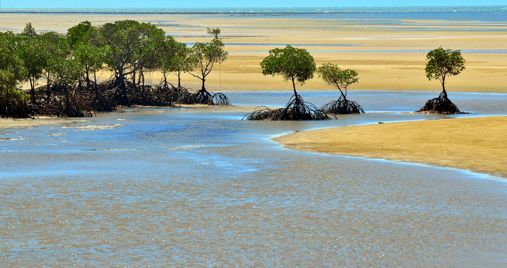 port-douglas-river-tours.jpg