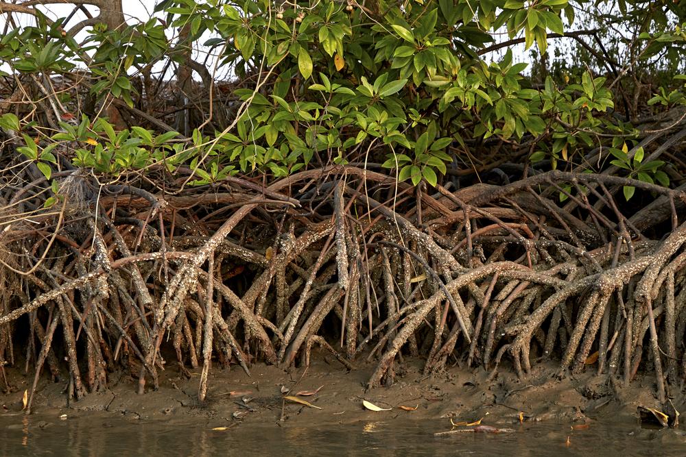 port-douglas-mangrove-tour.jpg