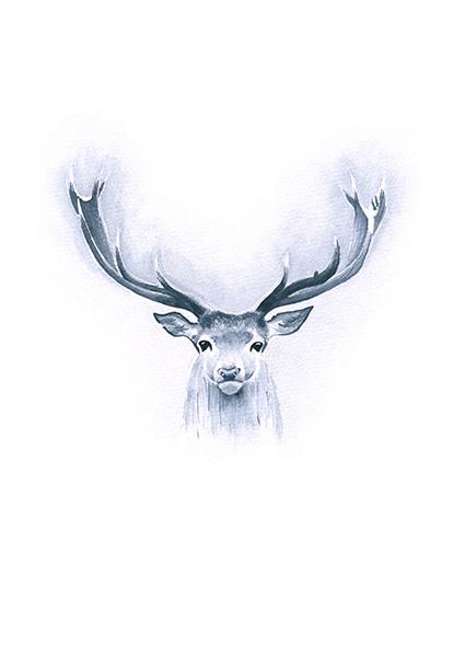 CIERVO. ilustración en acuarela. // lámina impresión gicclé tamaño a4