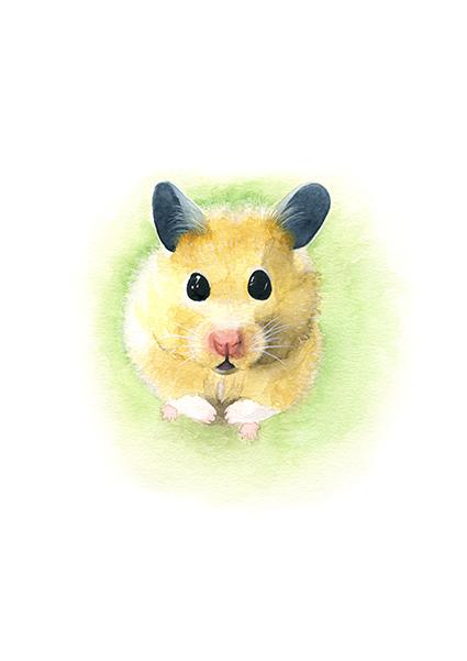 hamster. ILUSTRACIÓN EN ACUARELA. // LÁMINA IMPRESIÓN GICCLÉ TAMAÑO A4