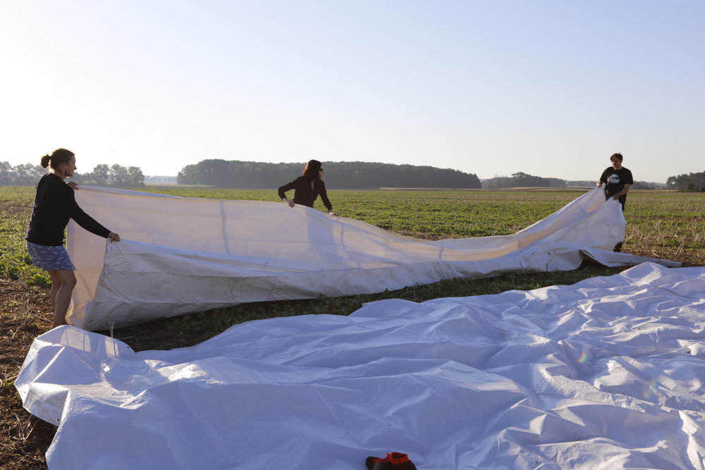 We spread white tarps on the ground to increase the albedo of our launching surface. Launching from a light-colored surface reflects the intensity of the sun's rays on the sculptures, resulting in greater buoyancy.