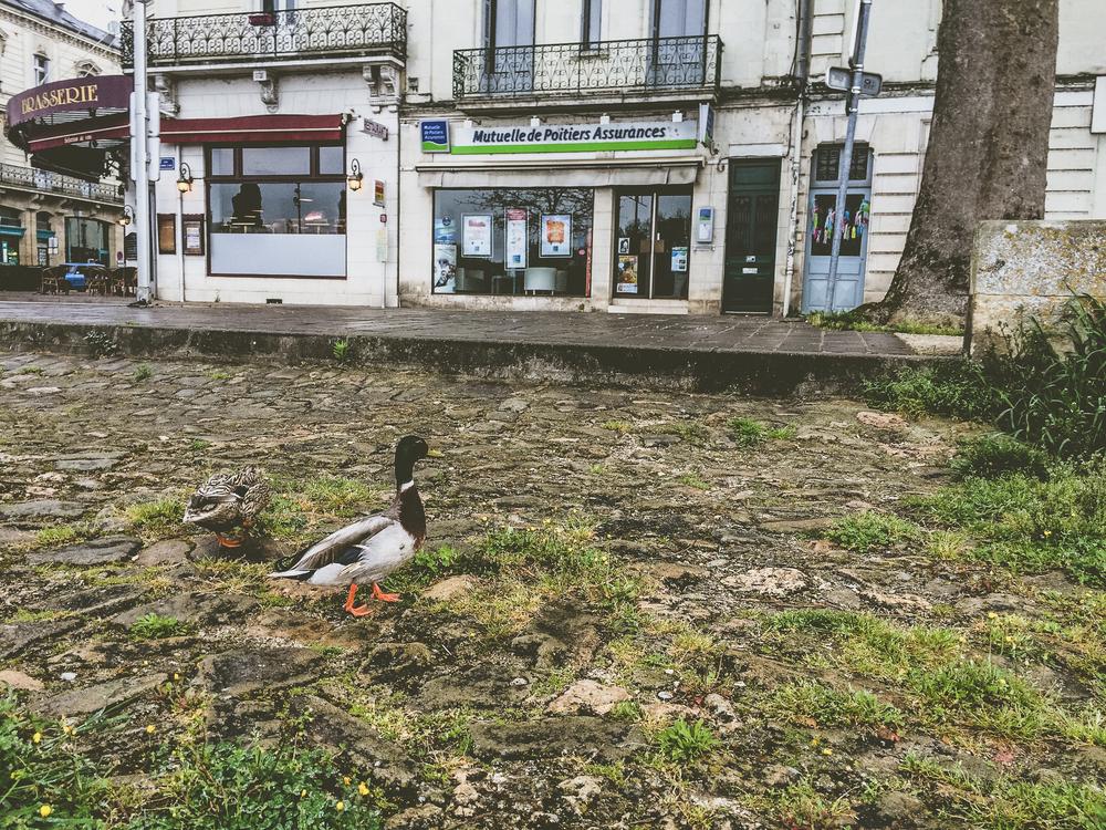 Edited Loire (58 of 130).jpg