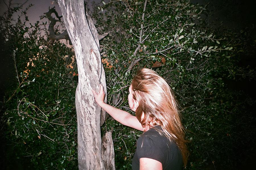 tree-touch-alt-17360009.jpg