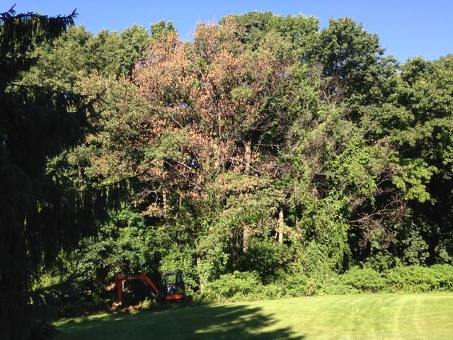 IMG_6787BrightonOW DemoSite Tree.jpg