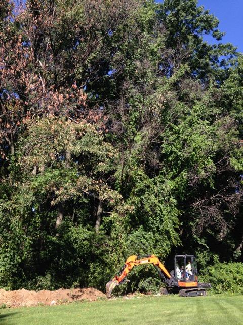 IMG_6792BrightonOW DemoSiteBackhoe&Tree(1).jpg