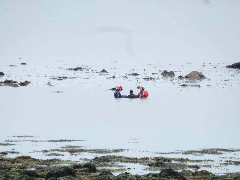 3 of the rescue team holding one of the whales upright in the water for hours so she wouldn't drown after losing feeling in her right side from being on the rocks for so long (credit: Andy Kulesza).