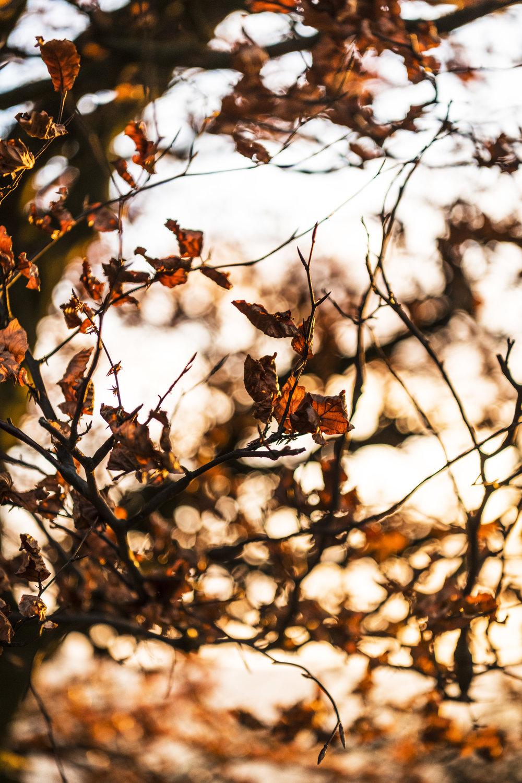 Bamford Leaves.jpg