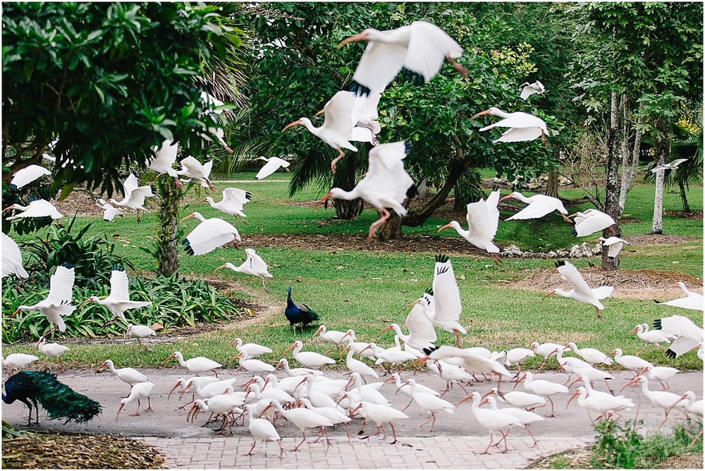 Flamingo-Gardens-Wedding-Photographer-Laura-Shaun-Sonju_0013.jpg