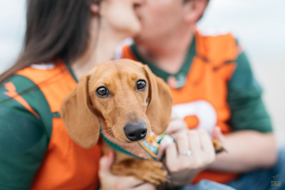 Weiner dog poses with her humans for an engagement session on the beach at John U Lloyd State Park in Fort Lauderdale Florida