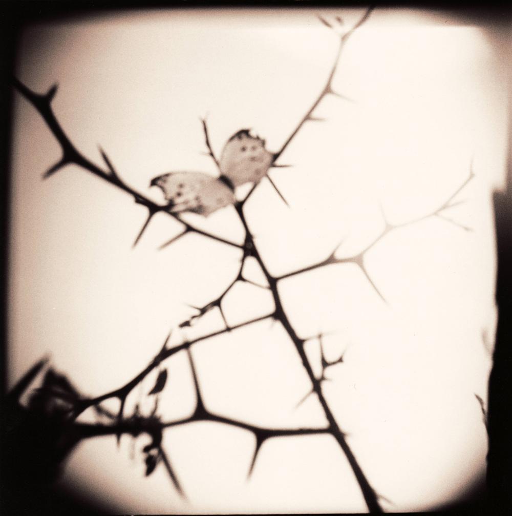 butterfly-thorn.jpg