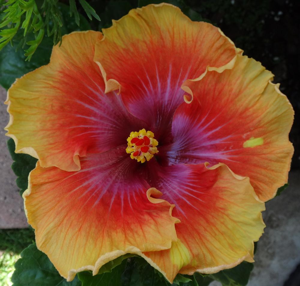 Maui Artist 8-22.4.jpg