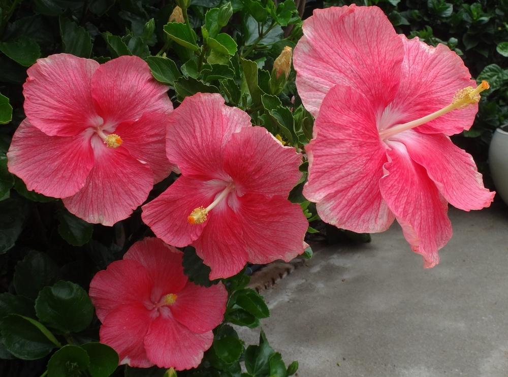 Crystal Pink Quads 9-15.jpg