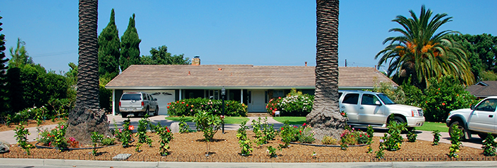 Newly planted exotic hibiscus landscaping 2012 - Tustin, Orange County
