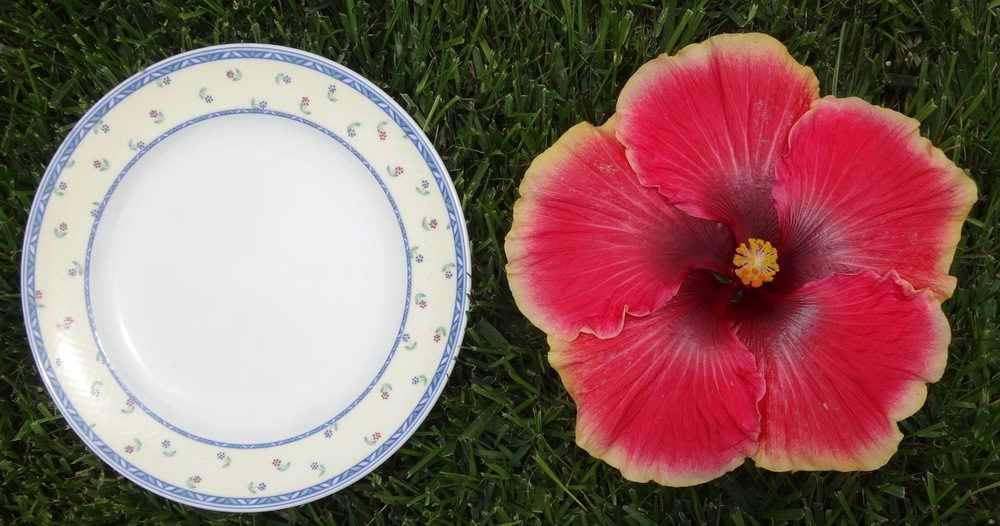 Living Legend Dinner Plate.jpg & Why Exotic Hibiscus are the Perfect Plant for a Drought Tolerant ...