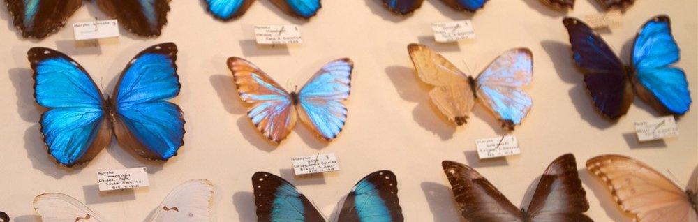 Image via coloradospringsbugmuseum.com