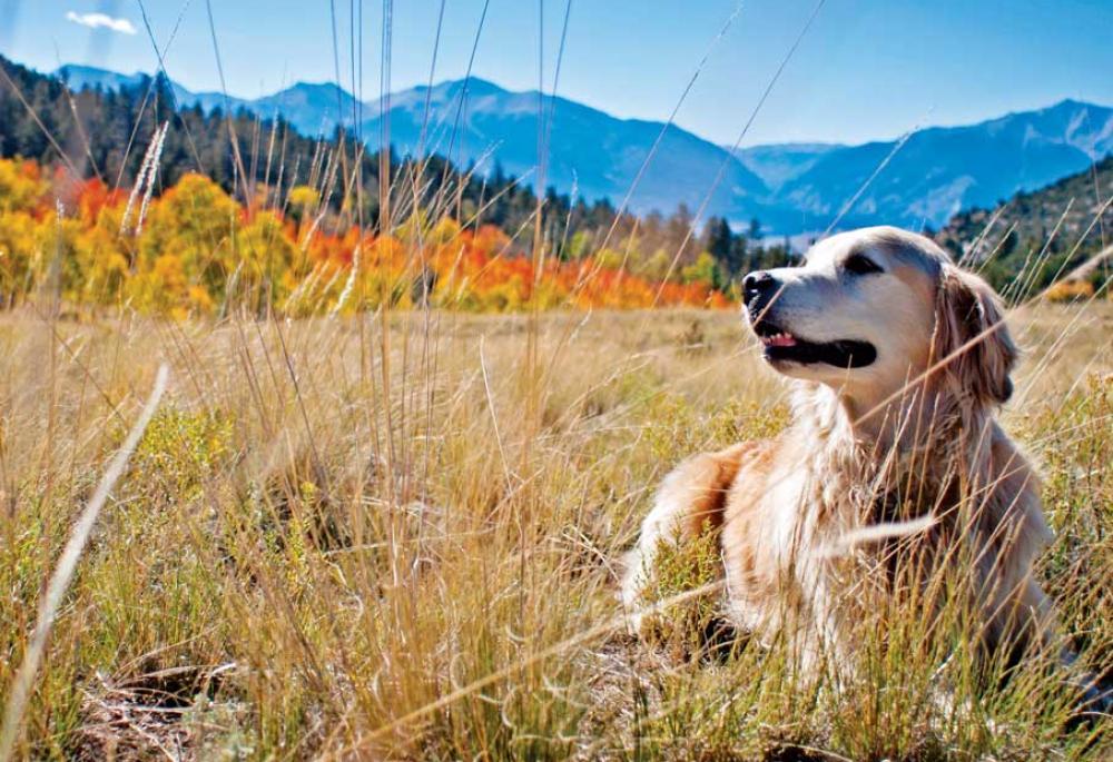 Via Colorado.com