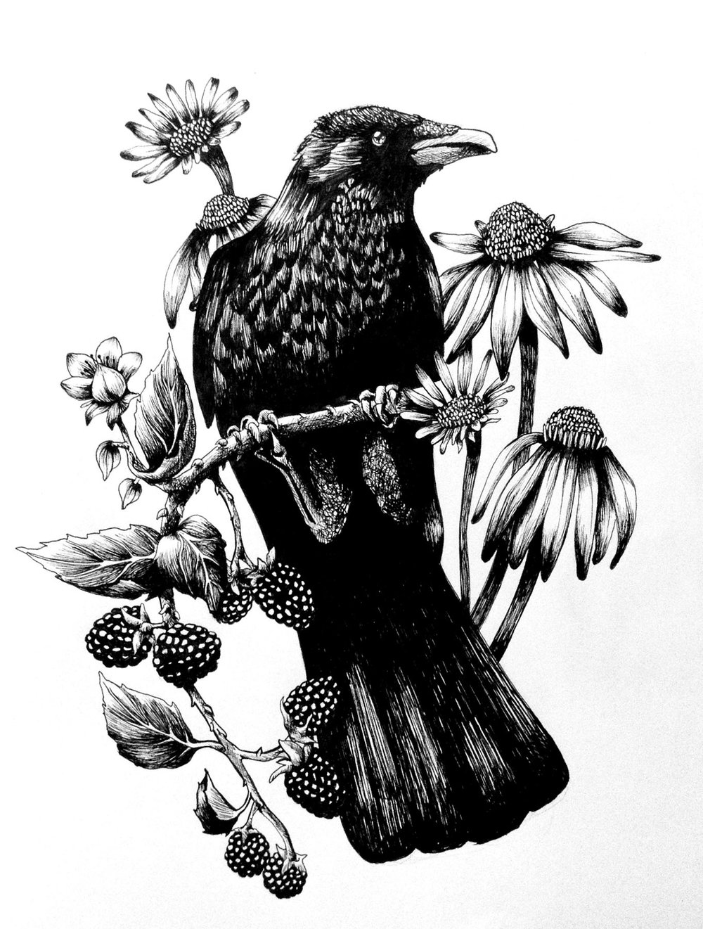Crow and Coneflowers