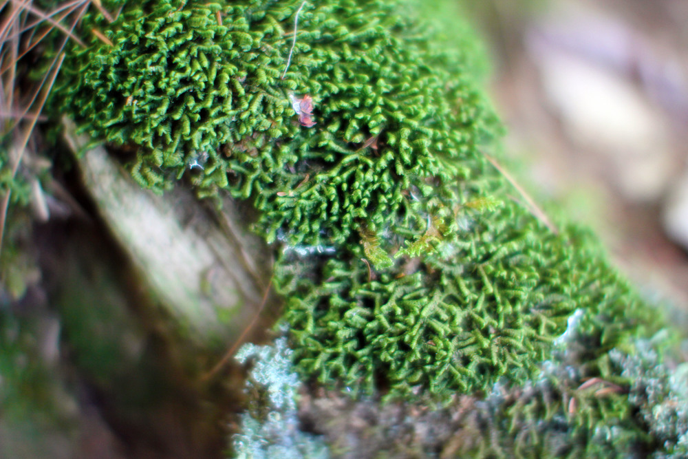 Forest floor is mossy.JPG