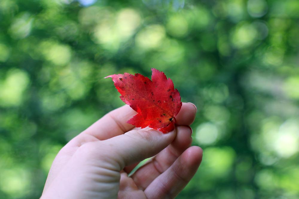 Signs of fall.JPG