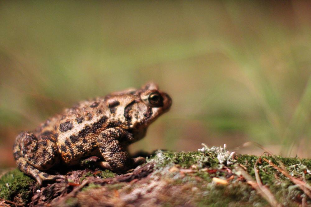 Toad biggie.JPG