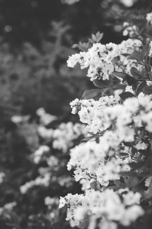 b&w flowers 1.jpg