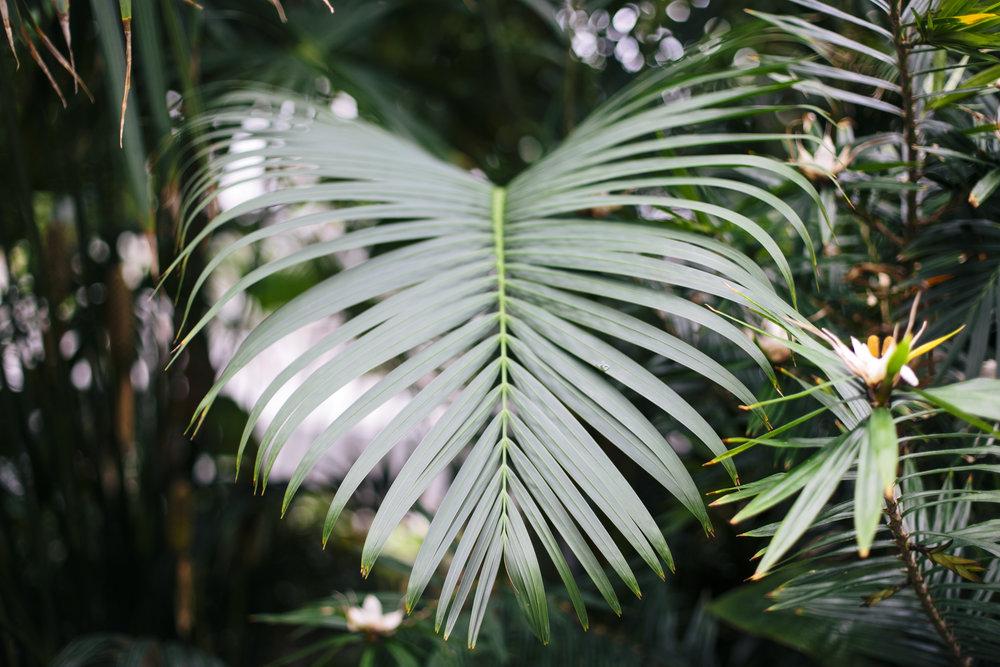 Botanic print2-2.jpg