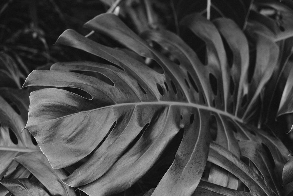 Botanic print3.jpg