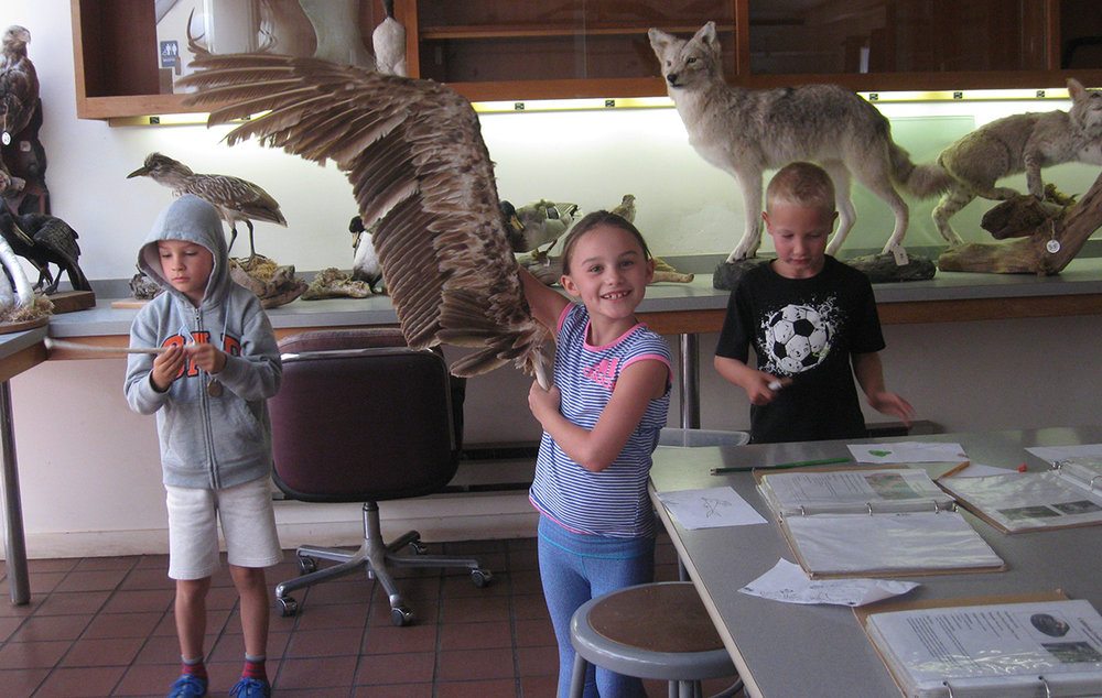 Coastal Campers explore nature in our skins and skulls lab.